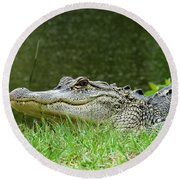 Gator 65 Round Beach Towel