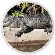 Gator Round Beach Towel