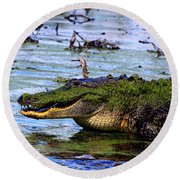 Gator Growl Round Beach Towel