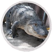 Gator On The Move Round Beach Towel