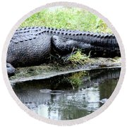 Gator On The Shore Round Beach Towel