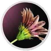 Gazania On Dark Background 2 Round Beach Towel