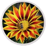 Gazania With Insect Round Beach Towel