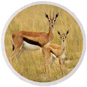 Gazelle Mother And Child Round Beach Towel