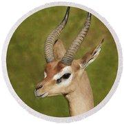 Gazelle Round Beach Towel