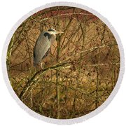 Gbh In A Tree Round Beach Towel