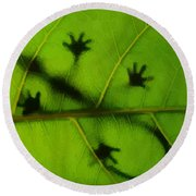 Gecko On A Leaf Round Beach Towel