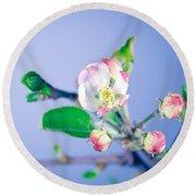 Gentle Apple Tree Flowers Round Beach Towel