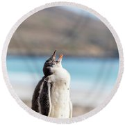 Gentoo Penguin Calling For Mother On Shingle Round Beach Towel