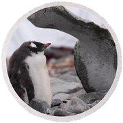 Gentoo Penguin Chick Under Whale Vertebrae Round Beach Towel