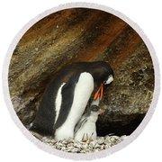 Gentoo Penguin Feeding Chicks Round Beach Towel