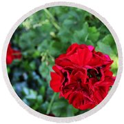 Geranium Flower - Red Round Beach Towel