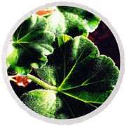 Geranium Leaves Round Beach Towel