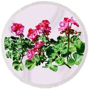Geraniums In A Row Round Beach Towel