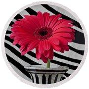 Gerbera Daisy In Striped Vase Round Beach Towel
