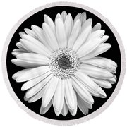 Single Gerbera Daisy Round Beach Towel
