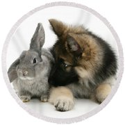 German Shepherd And Rabbit Round Beach Towel by Mark Taylor