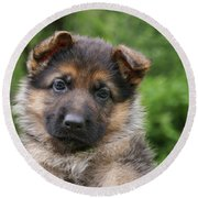 German Shepherd Puppy IIi Round Beach Towel by Sandy Keeton