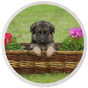German Shepherd Puppy In Basket Round Beach Towel by Sandy Keeton