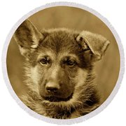 German Shepherd Puppy In Sepia Round Beach Towel