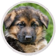 German Shepherd Puppy Round Beach Towel