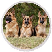 German Shepherds - Family Portrait Round Beach Towel