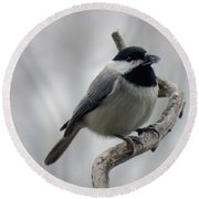 Getting Ready To Crack - Black-capped Chickadee Round Beach Towel