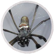 Getting To Know A Golden Orb Weaver Round Beach Towel