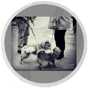 Getting To Know You - Puppies On Parade Round Beach Towel