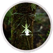 Ghost Orchid Of The Fakahatchee Strand Round Beach Towel
