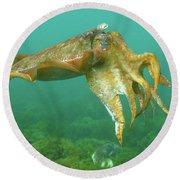 Giant Cuttlefish Round Beach Towel