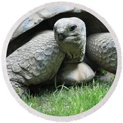 Giant Land Turtle Round Beach Towel