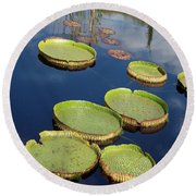 Giant Lily Pads Round Beach Towel