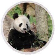 Giant Panda Bear Lounging On Against Tree Trunk Round Beach Towel