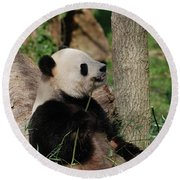 Giant Panda Bear Sitting Up Leaning Against A Tree Round Beach Towel