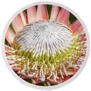 Giant Pink King Protea Flower Round Beach Towel