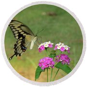 Giant Swallowtail Butterfly II Round Beach Towel