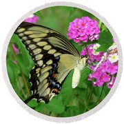 Giant Swallowtail Butterfly  IIi Round Beach Towel