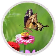 Giant Swallowtail Butterfly On Pink Zinnia Round Beach Towel
