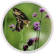 Giant Swallowtail Butterfly On Verbena Round Beach Towel
