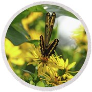 Giant Swallowtail Wings Folded Round Beach Towel