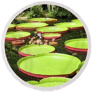 Giant Water Lily Platters Round Beach Towel