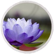 Gigantea Blue Cloud Water Lily Round Beach Towel