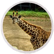 Giraffe 1 Round Beach Towel