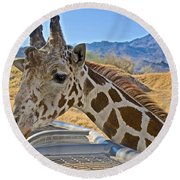 Giraffe At Feeding Station In Living Desert Zoo And Gardens In Palm Desert-california Round Beach Towel