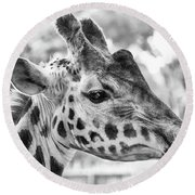 Giraffe Bw Round Beach Towel