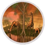 Giraffe Family By John Junek Round Beach Towel