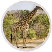 Giraffe Grazing Round Beach Towel
