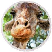 Giraffe Interest Round Beach Towel