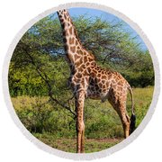 Giraffe On Savanna. Safari In Serengeti Round Beach Towel